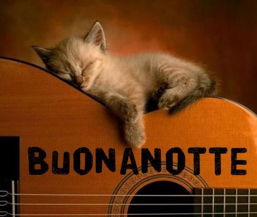 Buonanotte gatti